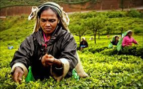 Resultado de imagen para las rutas del té