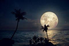 """Résultat de recherche d'images pour """"plages nocturnes"""""""