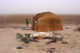 photo essay dara a high rate of livestock deaths is reported from s ogaden region due to drought and