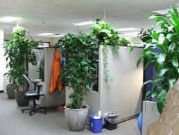 plants office garden green clean air indoor gardening best office plant no sunlight