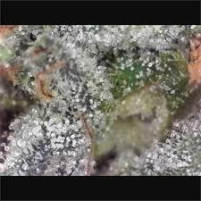 Buy Pink Bubba | <b>Grade AAAA</b> Weed