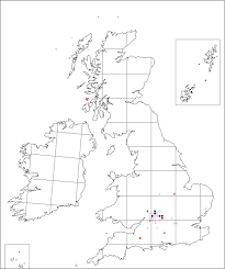 Thlaspi perfoliatum | Online Atlas of the British and Irish Flora