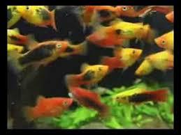 TetraAqua <b>AquaSafe</b>, 500 ml, <b>кондиционер</b> для аквариумной воды ...