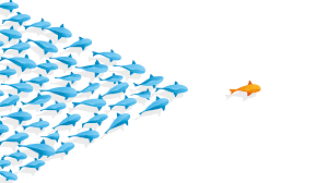 the qualities of an introverted leader quiet revolution fish follow the leader