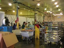 dutch harbor the hub for winter alaska fisheries jobs dutch harbor fish processing photo