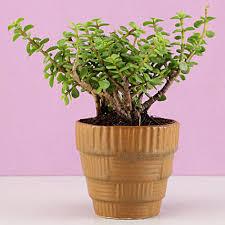 <b>New Arrival Plants</b> | Buy Latest <b>Plants</b> Online <b>2019</b> - Ferns N Petals