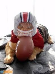Image result for cats in football uniform