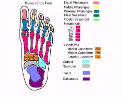 foot anatomy  anatomy and bone jewelry on pinterestfoot anatomy diagram