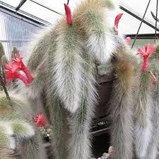 Egrow 20Pcs/Bag Succulent <b>Plant</b> Seeds Limited Sementes <b>Cactus</b> ...