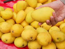 Image result for images of mangoes basket