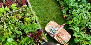 why gardening is good for your stress com
