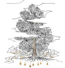 The <b>Big</b> Bad Cedar <b>Atkinsons</b> 1799