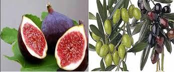 هل تعلم ما يحدث لجسم الانسان اذا اكل التين و الزيتون معا images?q=tbn:ANd9GcQ