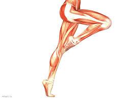「下肢と構造」の画像検索結果