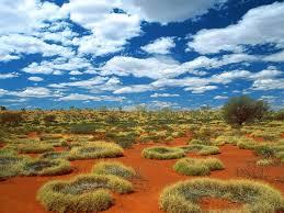Resultado de imagem para Dia mundial de combate à seca