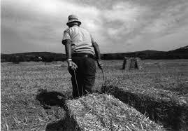 Risultati immagini per contadini