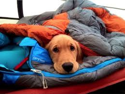 Camping With Dogs   fleece blankets and coats work when it is raining   Fleece dries
