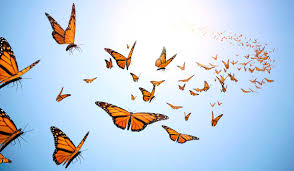 Image result for taming butterflies