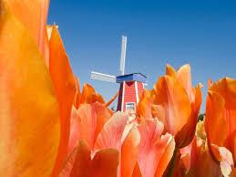 15 Beautiful Photos of Spring <b>Flowers Around</b> the World - Condé ...