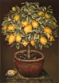 lemon tree x: lemon tree jose escofet lemontreeinblossominterracottapotxcmsgouache lemon tree jose escofet
