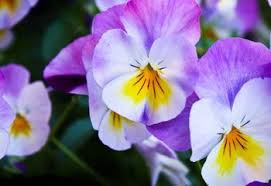 62 Types of <b>Purple Flowers</b> - ProFlowers Blog