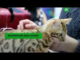 <b>Без кота</b> и жизнь не та: во всем мире отмечают День кошек ...