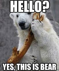 hello-yes-this-is-bear.jpg via Relatably.com