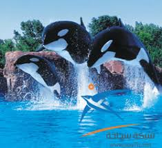 اروع الدلافين images?q=tbn:ANd9GcQ