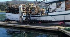 Fishermen Struggle as Commercial Dungeness Crab Season Stays ...
