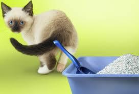 slideshow cat behavioral problems start an unclean litter box cat litter box