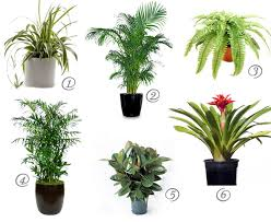 1000 images about cat friendly plants on pinterest spider plants low light plants and plants cat safe furniture