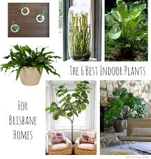 not all plants work well in indoor spaces but ive pulled together for you the six best indoor plants for brisbane homes brisbane office plants