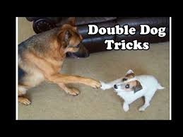 Amazing <b>Double Dog</b> Tricks by Jesse and Kaine - YouTube