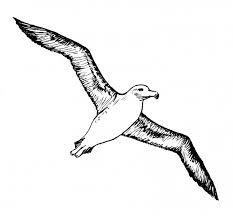 Отзывы о книге <b>Черный альбатрос</b>