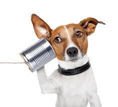 heeding the call finding meaning in your career and life the dog on the phone a can
