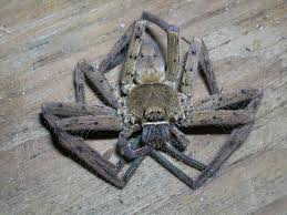 Spiders: how to prevent/get rid of them? - The Garage Journal Board