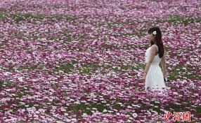 Image result for cánh đồng mùa xuân