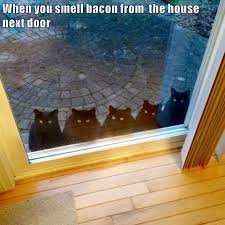 Lolcats - <b>bacon</b> - LOL at <b>Funny Cat</b> Memes - <b>Funny cat</b> pictures with ...