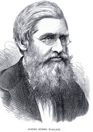 Broadstone's celebrated naturalist - Alfred Russel Wallace. Alfred Russel Wallace. Words & photos by Edward Griffiths Wednesday, December 4, 2013 - 2787964378