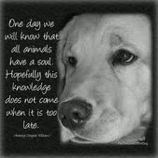 Image result for animals have souls too