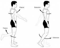 anatomical terms of movement flexion rotation teachmeanatomy fig 1 0 flexion and extension