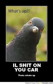Inquisitive Bird Meme Generator - Captionator Caption Generator ... via Relatably.com
