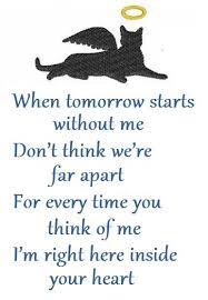 Cat Poems on Pinterest | Quotes About Cats, Rainbow Bridge Poem ... via Relatably.com