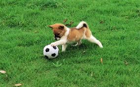 Θα παίξουμε μπάλα;