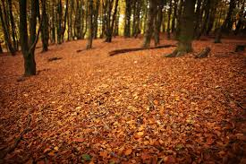 Here's What to Do <b>With</b> Your <b>Fallen</b> Leaves in Fort <b>Collins</b>