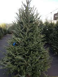 <b>Christmas Trees</b> — Stewart's Original <b>Hot</b> Dogs