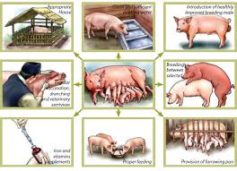 How to Farm Pigs   Housing   The Pig SiteHow to keep a healthy pig