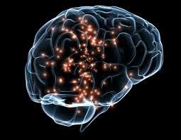 brain에 대한 이미지 검색결과