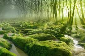 12 Of The Most <b>Mysterious</b> Forests In The World – tentree