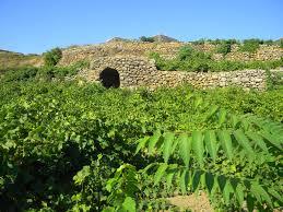 Image result for pellegrino marsala vineyard photos free